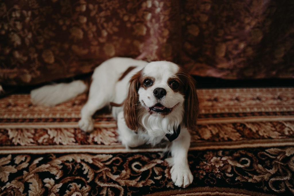 Mariage chateau de bouffémont wedding paris France french castle cute dog